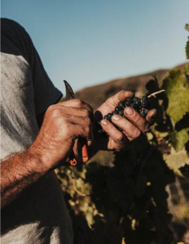 salva-lopez-commissioned-mas-martinet-wine-priorat-025 1